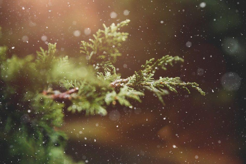 Stille Nacht - Eines der bekanntesten Weihnachtslieder der Welt